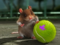 Hamster3d